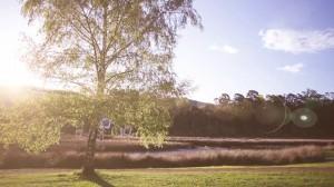 Vídeo de Miguel Portillo titulado El árbol de la vida