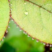 Fotografía de Miguel Portillo de título Perlas de cristal
