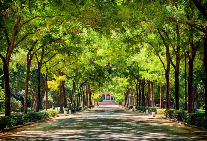 Fotografía de Miguel Portillo de título Setenta árboles