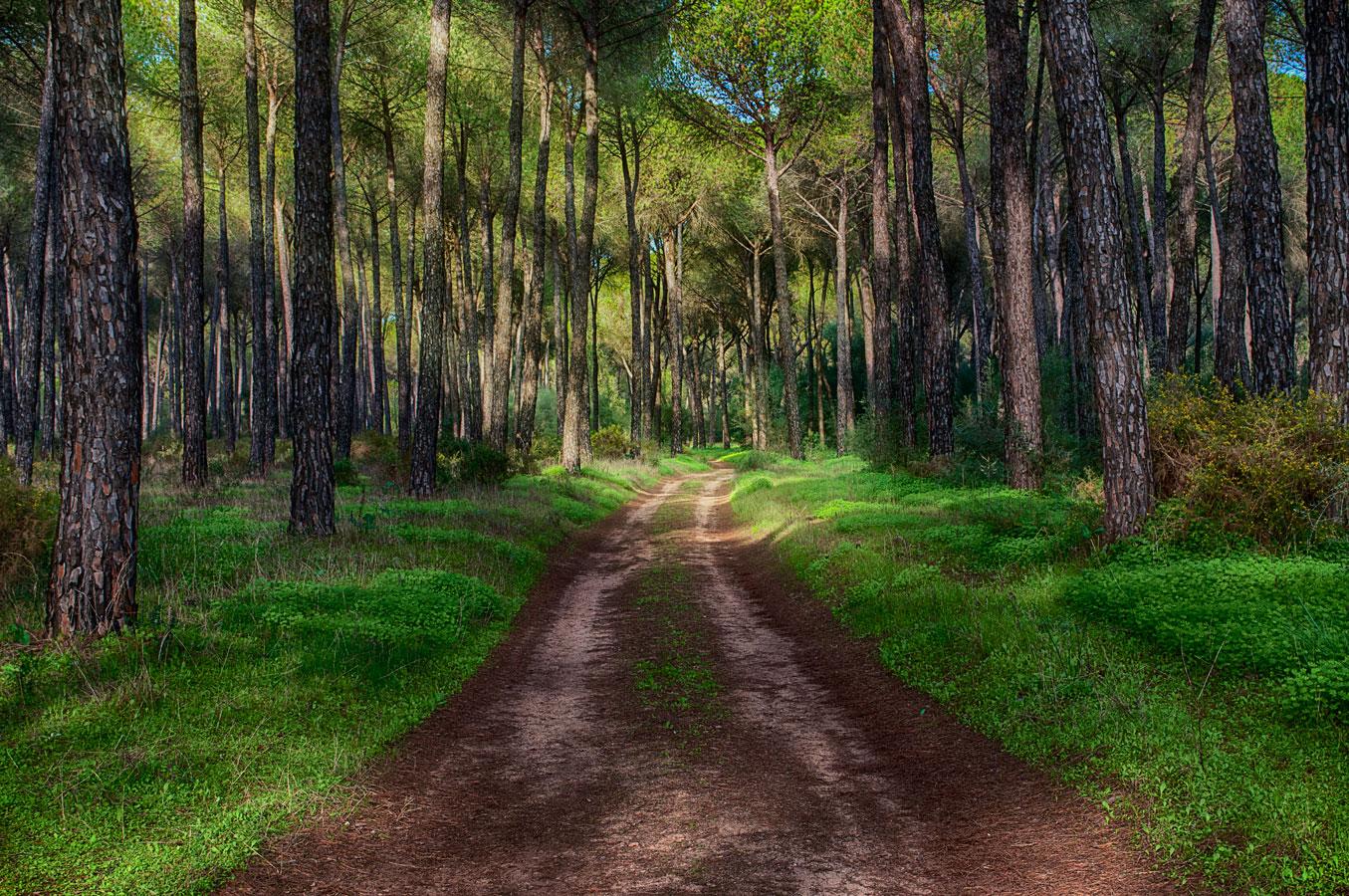 Fotografía de Miguel Portillo. Título: Andaré los caminos.
