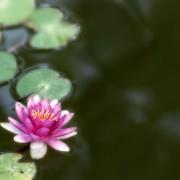 Fotografía de Miguel Portillo. Título: Tengo una pequeña flor.