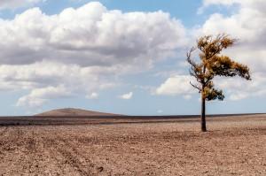 Fotografía de Miguel Portillo. Título: Árbol de mi pensamiento.