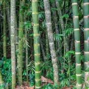 Fotografía de Miguel Portillo. Título: Altos bambúes